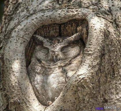 To sowa czy drzewo?