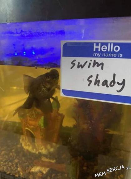I'm a swim shady, the real swim shady