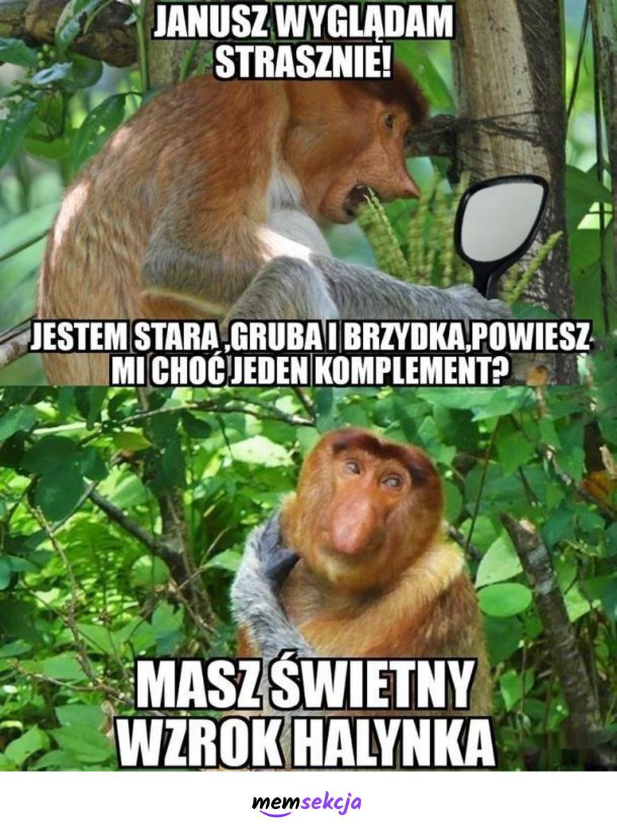 Janusz wyglądam strasznie. Śmieszne zwierzęta. Janusz. Małpa. Nosacz. Komplement