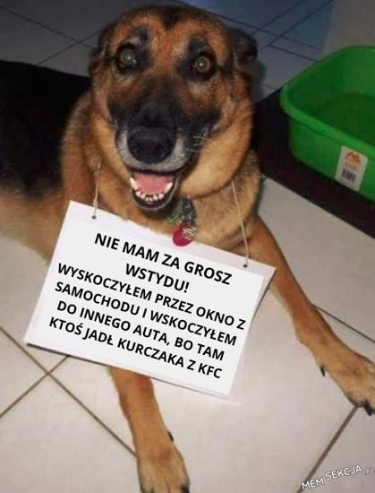 Pies nie ma za grosz wstydu