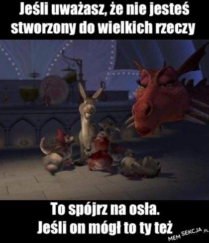Osioł ze Shreka dał radę ze smoczycą