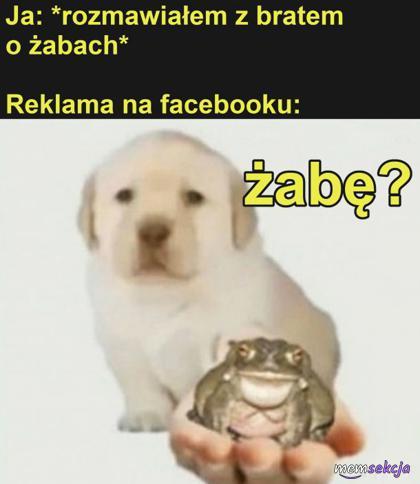 Chcesz może kupić żabę?