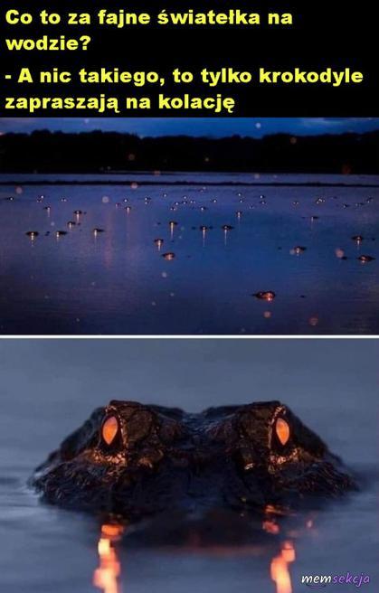 Krokodyle zapraszają na kolację
