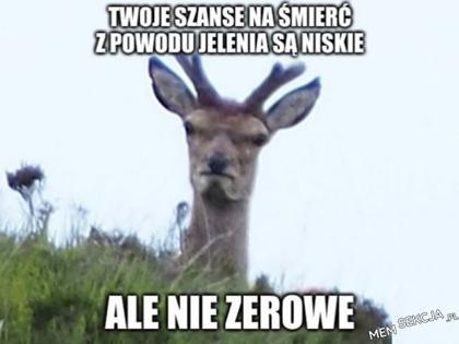 Twoje szańce na śmierć z powodu jelenia