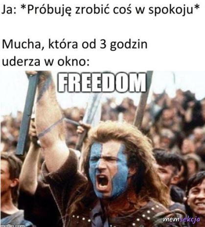 Mucha i jej zew wolności