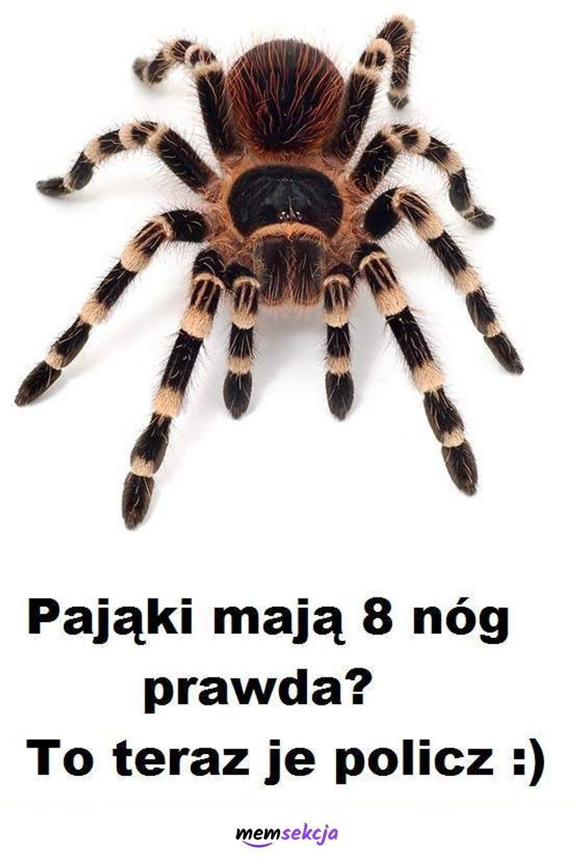 Ile pająk ma nóg?. Śmieszne. Pająki
