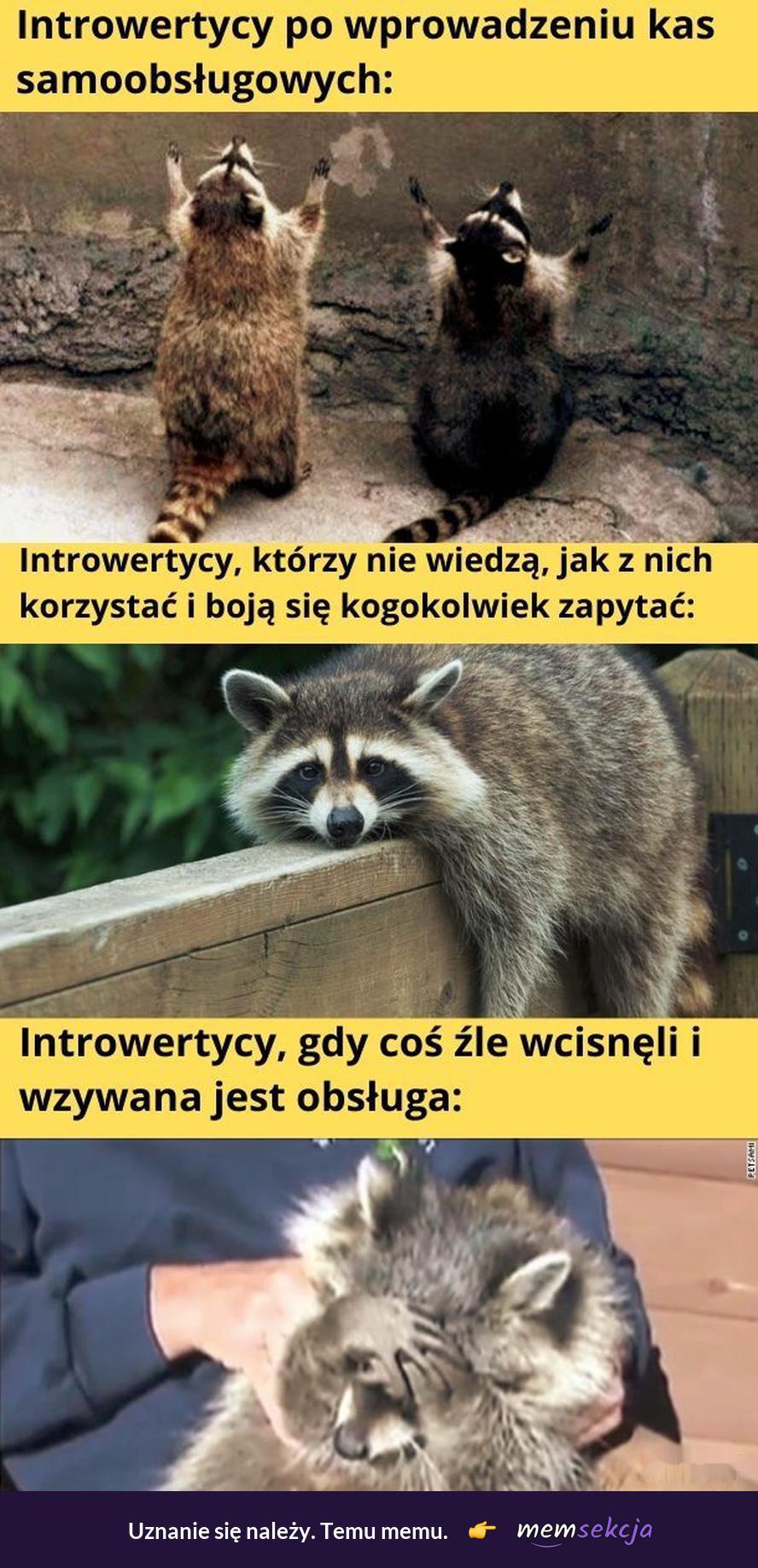 Introwertycy vs kasy samoobsługowe. Memy. Introwertyk. Kasa  W  Biedronce. Kasa  Samoobsługowa