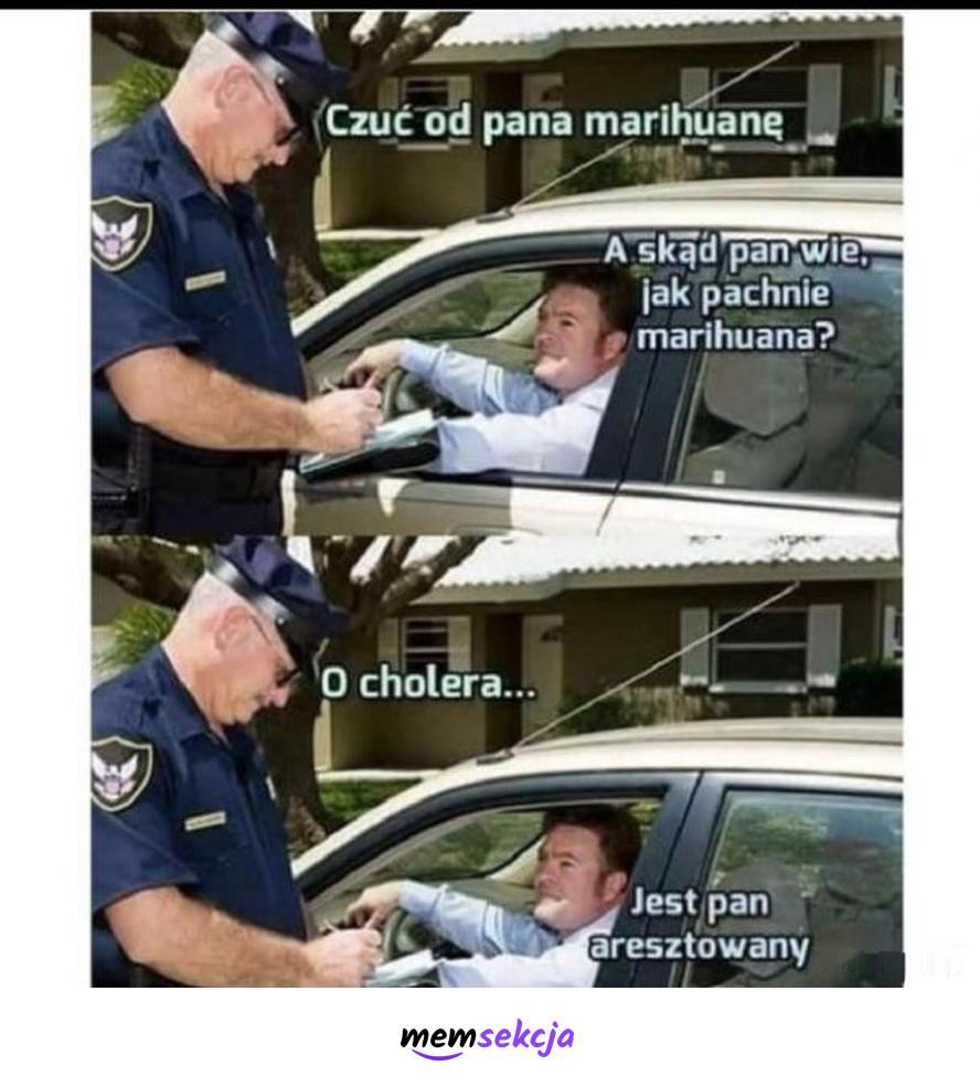 A skąd pan wie jak pachnie marihuana?. Śmieszne. Marihuana. Narkotyki. Policja