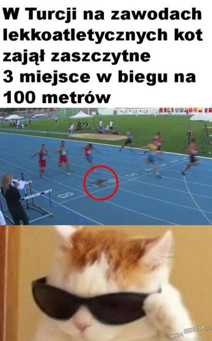 Kot na zawodach w Turcji zajął 3 miejsce w biegu na 100 metrów