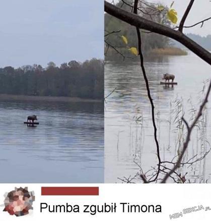 Pumba zgubił Simona