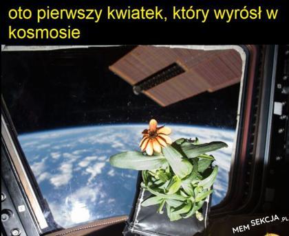Pierwszy kwiatek z kosmosu