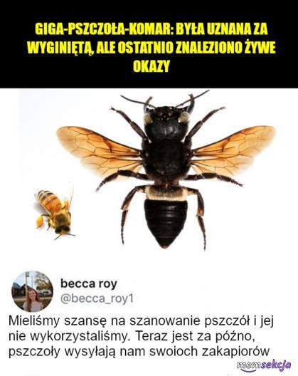 Mieliśmy szansę na szanowanie pszczół i jej nie wykorzystaliśmy