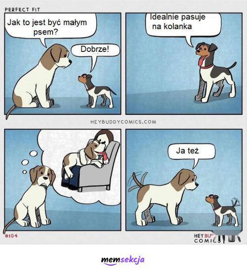 Każdy pies idealnie pasuje na kolanka. Śmieszne psy