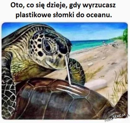 Dbajcie o zdrowie żółwi