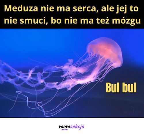 Meduza nie jest smutna. Memy. Meduza