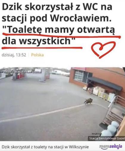 Dzik skorzystał z WC na stacji pod Wrocławiem