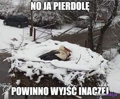 Bocian przyleciał na zimę do Polski
