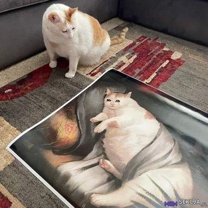 Kot patrzący na swój obraz