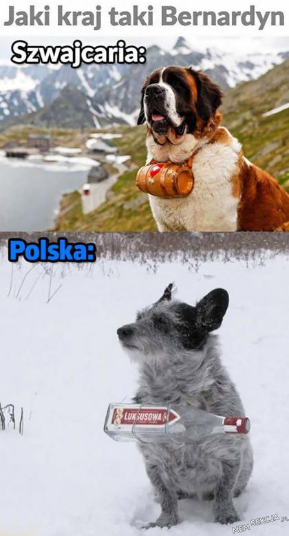 polski bernardyn