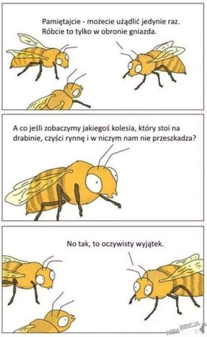 Kiedy pszczoły mogą żądlić