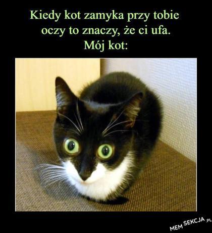 Kiedy kot zamyka przy tobie oczy, to znaczy że ci ufa