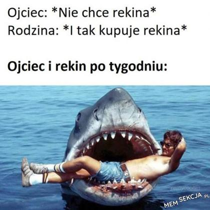 gdzie kupić rekina?
