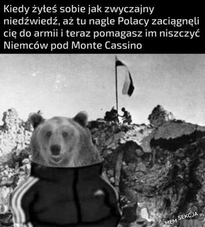 Kiedy żyłeś sobie jak zwyczajny niedźwiedź a tu nagle... Memy