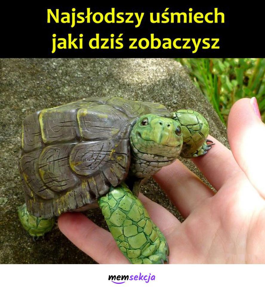 Słodziutki uśmiech żółwia. Śmieszne zwierzęta. Żółw