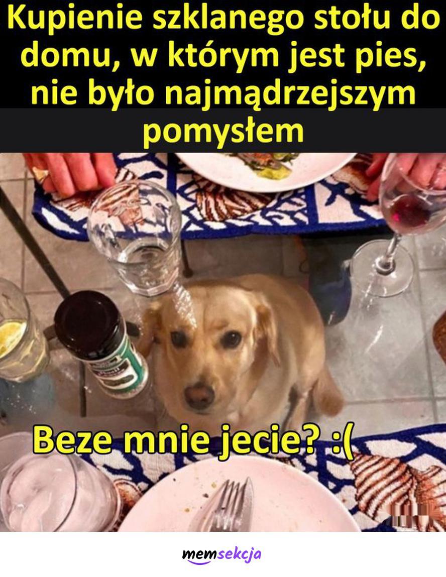 Pies pod szklanym stołem. Śmieszne psy