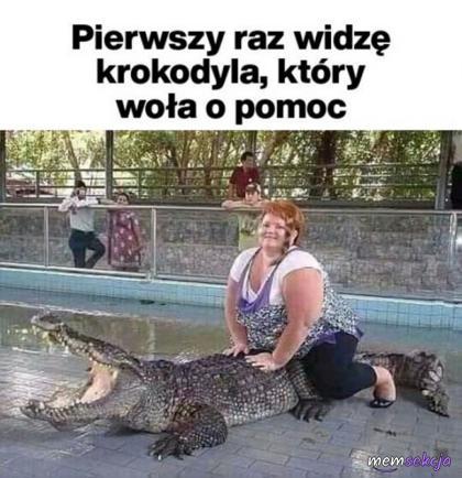 Krokodyl wołający o pomoc