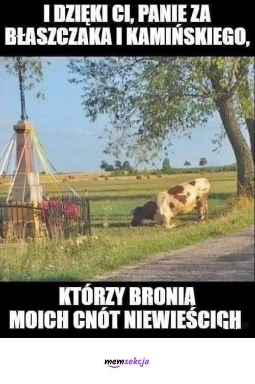 Krowa dziękuje za Błaszczaka i Kamińskiego. Memy. Krowa. Mariusz  Kamiński. Mariusz  Błaszczak. Zoofilia