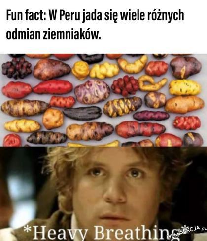 A w Polsce tylko kartofel