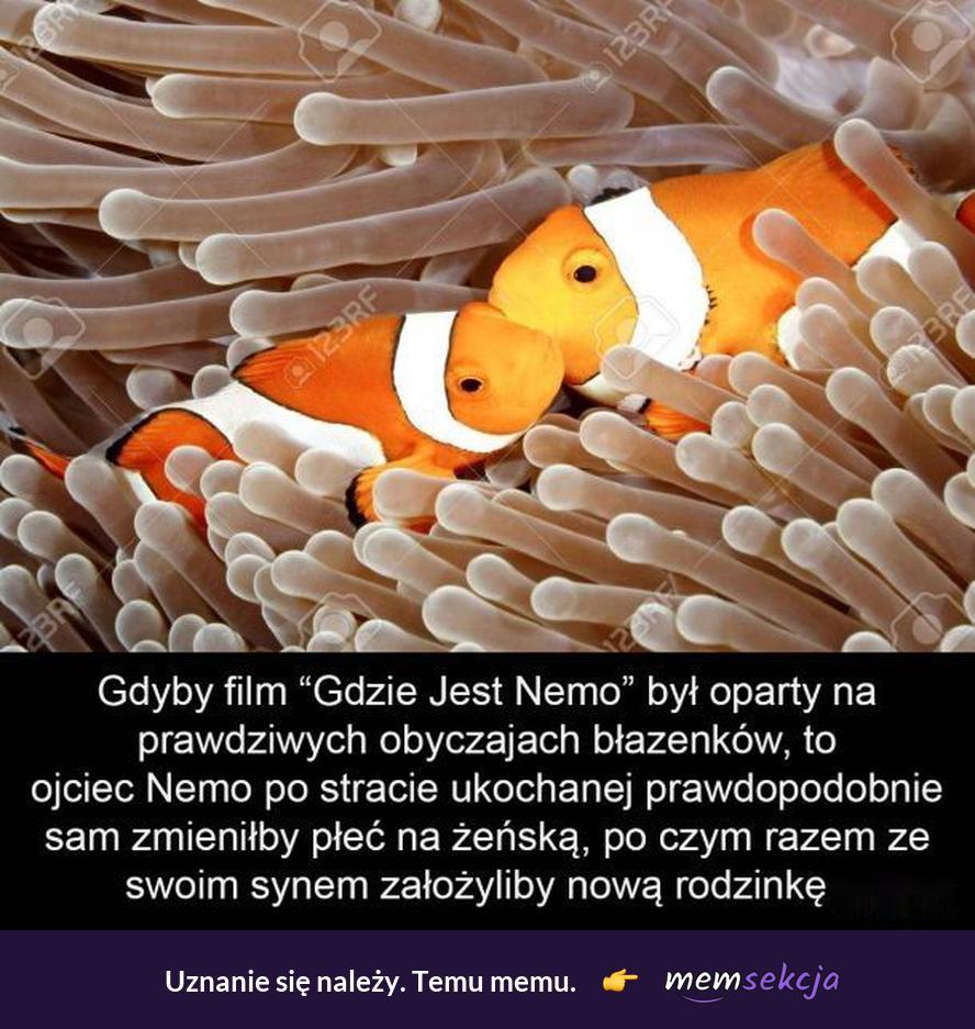 Gdyby Gdzie jest Nemo był oparty na prawdziwych obyczajach błazenków. Śmieszne zwierzęta. Nemo