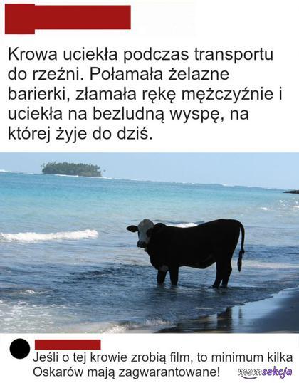 Krowa o której powinien powstać film