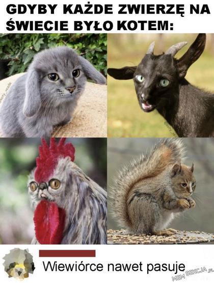 Koto-wiewiór. Śmieszne