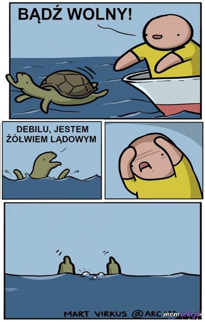 Bądź wolny żółwiu