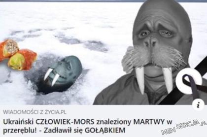 Ukraiński człowiek mors zadławił się gołąbkiem
