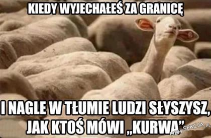 Kiedy jesteś za granicą i w tłumie słyszysz KURWA