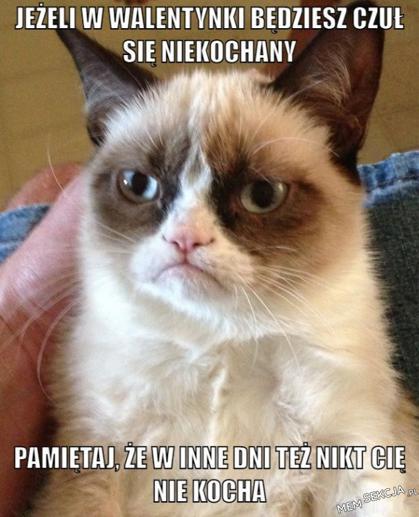 Pocieszające słowa kotka na walentynki
