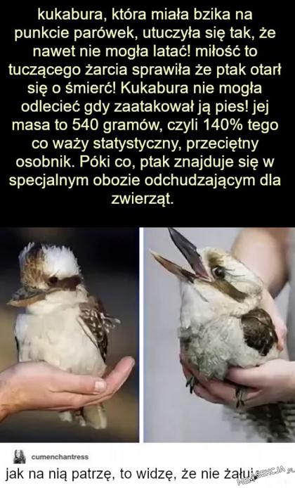 Historia pewnej kukabury, która lubiła parówki