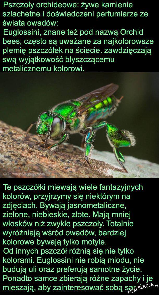 Ponadto samce zbierają rożne zapachy