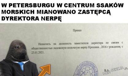 Nerpa zastępcądyrektora w Petersburgu