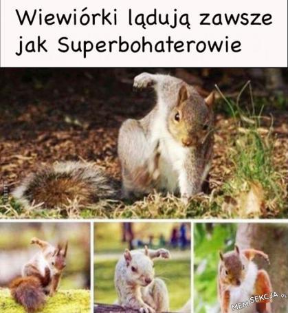 Wiewiórki lądują jak superbohaterowie