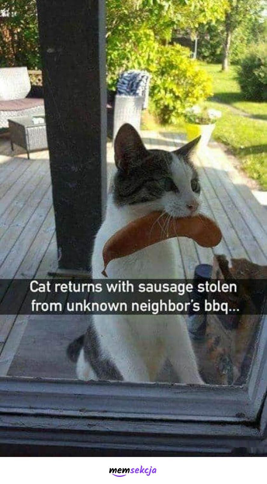 Kot ukradł kiełbasę. Śmieszne koty. Kiełbasa. Złodziej