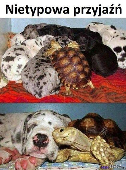 Żółwik zaprzyjaźnił się z pieskiem