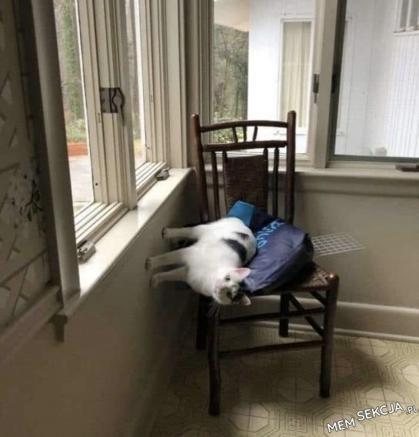 typowy śpiący kot