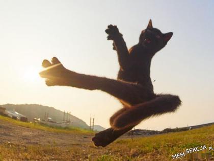 kung fu kotek