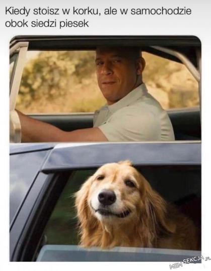 Kiedy w samochodzie obok siedzi piesek