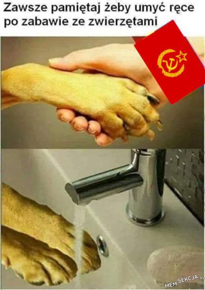 Po zabawie ze zwierzętami umyj ręce