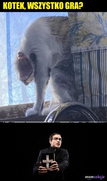 Kotek potrzebuje egzorcyzmu